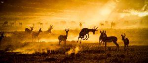 kalahari-desert-wild-life