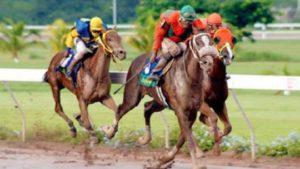 horses-racing